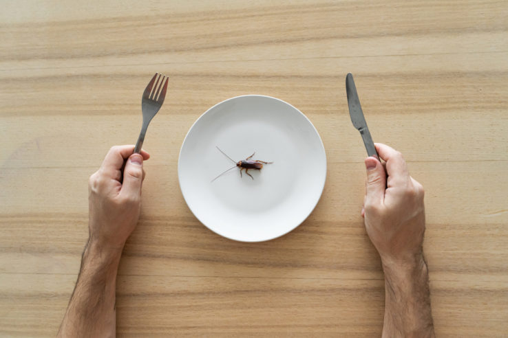 German cockroach control for food service/restaurant industry